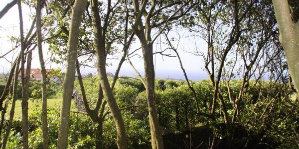 Kikis Azoren Wald