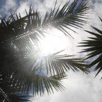 Kikis-Azoren Garten Palme
