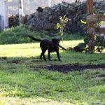 Kikis Azoren Tiere Millie und Samba